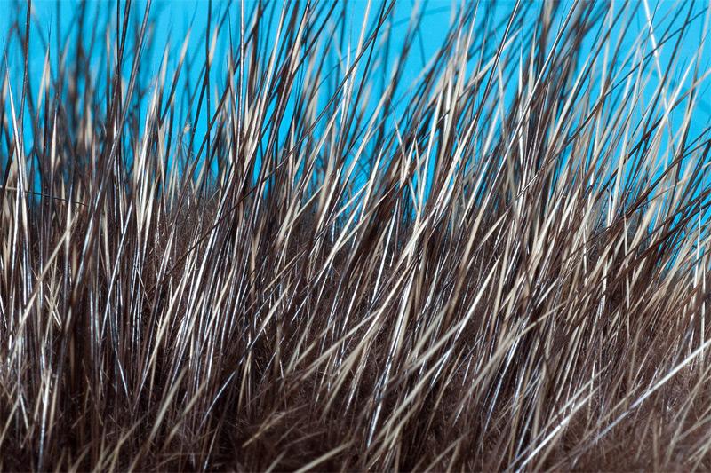 1-nutria-hair