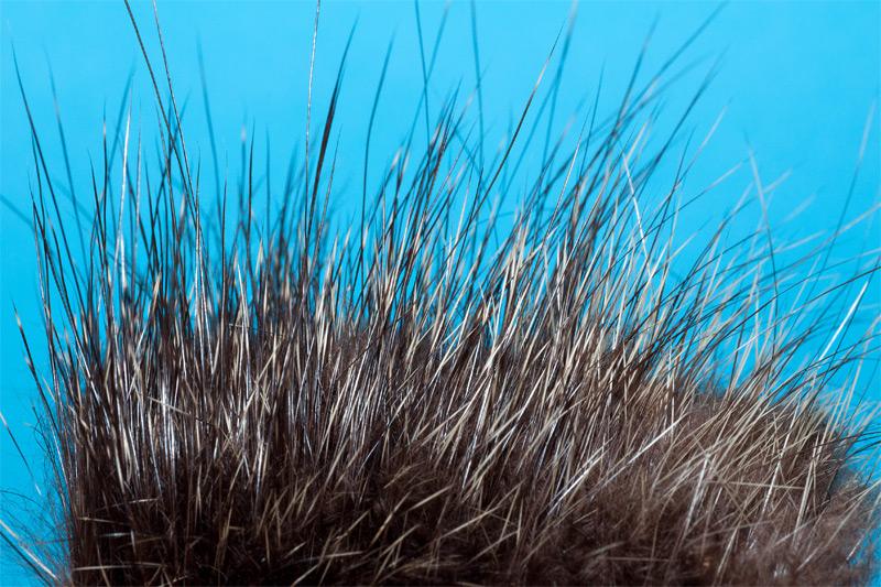 2-nutria-hair