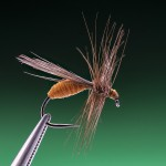 pupking winged ant for trout and grayling