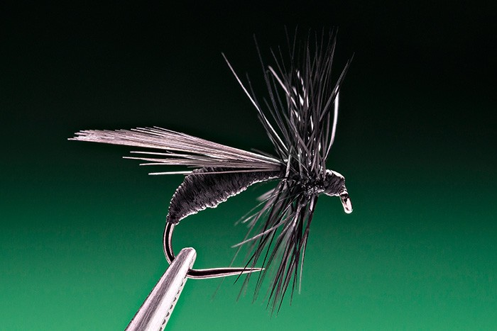 winged black ant for trout